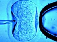Romancele ar putea face prima fertilizare in vitro pe banii statului