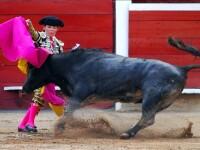 Toreador de 12 ani, luat in coarne de un taur!