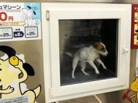 Japonezii isi spala cainii la masina, ca sa economiseasca bani!