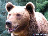 Spaima la slujba de Florii. Un urs a pus gheara pe rucsacul unui turist