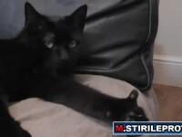 """""""Sunt OK"""". Cea mai desteapta pisica din lume. VIDEO"""