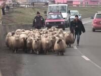 Macel pe sosea. A fost baie de sange pe Drumul National 1, la intrarea in Alba Iulia