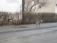 Romania, tara tututor posibilitatilor. O lege permite eutanasierea cainilor, iar alta o interzice