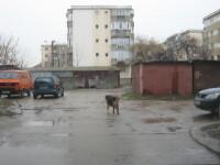 Timisoara: Locatarii blocurilor care detin mai mult de doi caini sau pisici vor fi amendati