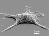 Cercetatorii au creat celule \