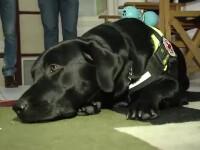 Premiera in Romania. Metoda inedita de terapie prin care putem scapa de stres cu ajutorul cainilor