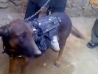 Talibanii afgani plimba in lanturi un caine militar furat de la fortele NATO, in urma unor confruntari. VIDEO