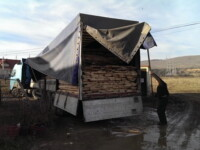 Politistii din comuna Floresti au confiscat 42 de mc de cherestea