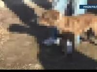 5 persoane au fost ridicate de politie dupa ce au fost surprinse organizand lupte intre caini