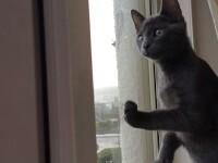 Reactia amuzanta a unei pisicute care vede zapada pentru prima oara. VIDEO
