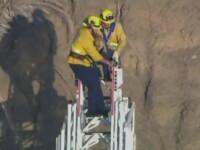 Salvare emotionanta a unui caine blocat in peretele unei faleze din California. VIDEO