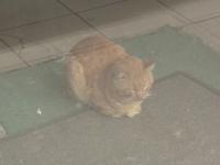 O pisica a ramas blocata intr-un magazin sigilat de ANAF inainte de Craciun. Epopeea motanului ce nu poate fi salvat