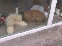 Mobilizare de forte, pentru a salva pisica blocata intr-un magazin inchis de ANAF. Cum s-a terminat operatiunea