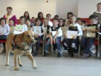 Elevii invata cum sa reactioneze in preajma maidanezilor. Proiectul se desfasoara in 25 de scoli din Bucuresti si 6 judete
