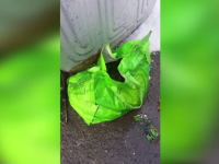 Catei si pisici, morti inghetati dupa ce au fost abandonati in pungi la gunoi. Exista asociatii care pot prelua puii nedoriti