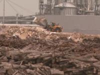 Lovitura primita de colosul austriac Holzindustrie Schweighofer, cel mai mare procesator de lemn din Romania