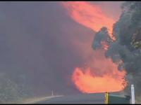 Sud-estul Australiei, devastat de incendii puternice de vegetatie. Autoritatile au identificat 90 de focare