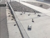 Ploaie de păsări moarte într-un oraş din SUA. Oamenii dau vina pe extratereştri