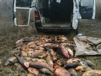 Doi români au șocat autoritățile spaniole. Au furat 2 tone de pește dintr-o rezervație