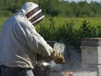 Apicultori: Anul acesta vom avea miere românească mai puțină și mai scumpă