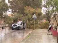 Românul care a murit strivit de un copac în Malta plecase din Bistriţa în căutarea unui trai mai bun