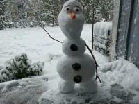 """Corupția Ucide, apel pentru Piața Victoriei: """"Hai afară la zăpadă! Hai Olafi să construim!"""""""