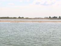 Explicații pentru o apariție inedită pe Dunăre. Fenomenul atrage numeroşi curioşi