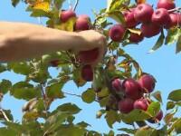 România are livezi, dar nu are recolte. Nu știm să lucrăm cu specialiști