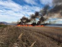 Incendiu de proporţii în Delta Dunării. De ce cred pompierii că a fost pus de un localnic