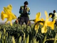 Aproape 600.000 de români au aplicat pentru rezidență în Marea Britanie. Care e termenul limită