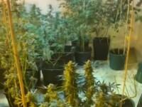Zeci de ghivece cu canabis, descoperite în locuința unui bărbat din Dolj