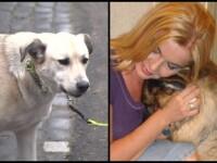 Ce s-a întâmplat cu câinii Cristinei Țopescu. Bonnie și Sissi au nevoie de ajutor