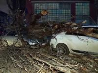 """Un copac de mari dimensiuni s-a prăbușit peste 2 mașini în Capitală: """"Am crezut că este o glumă"""""""