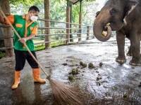 Un elefant a ucis un angajat al unei grădini zoologice cu o singură lovitură de trompă