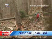 Romania, te iubesc: Arborii cresc greu, dar cad usor