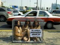 Protest in lenjerie intima in mijlocul orasului! Doar pentru animale