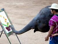 Elefantul care se crede Picasso