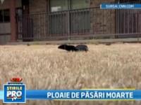 Miile de pasari cazute intr-un orasel din Arkansas au murit de frica