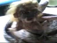 Creatura cu trup de sarpe, chip de om si par blond, in Indonezia. VIDEO