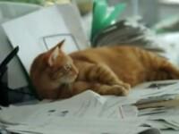 Reclamele cu pisici, reteta succesului in publicitatea online. Cum faci bani cu feline VIDEO