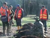 Focar de pestă porcină la Balc, lângă rezervaţia de mistreţi a lui Ion Ţiriac