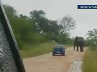 Atacati de elefant. Momentul in care un safari in Africa de Sud s-a transformat intr-un cosmar