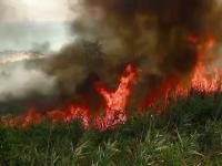 Motivul incredibil pentru care doi frati din Neamt provocau incendii