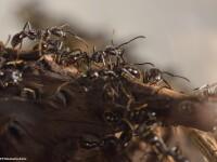 NASA a trimis 800 de furnici in spatiul cosmic. Ce vor sa afle oamenii de stiinta cu ajutorul insectelor