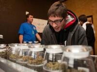 Arme contra marijuana. Ce reguli vor trebui sa respecte americanii care folosesc marijuana medicinala