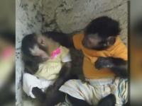 Momentul in care maimutica Angelica este consolata de amicul ei, Toby. Imaginile sunt deja un hit pe internet