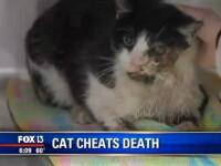 Pisica din SUA care a sfidat moartea. Ce s-a intamplat dupa ce a fost lovita de o masina si apoi ingropata