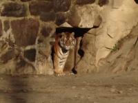 Animalele de la Gradina Zoologica din Mures care se bucura de gerul de afara. Cum sunt ingrijite pe timp de iarna