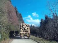 Cum vor plati cei care transporta ILEGAL lemne, in tara in care se defriseaza 3 hectare de padure/ora