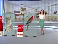 48% dintre romanii din mediul urban au un animal de companie. Ura dintre pisici si caini devine tot mai mult un mit